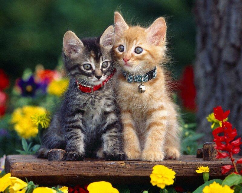 Кошки  0_5294c_b78e219_XL