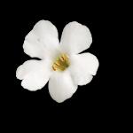 «ZIRCONIUMSCRAPS-HAPPY EASTER» 0_53da5_b4d77556_S