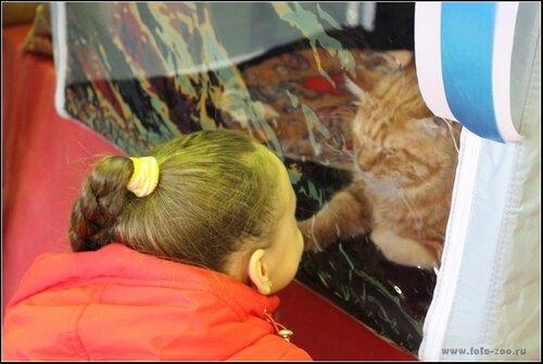 """Международная выставка кошек AFC """"Удивительные кошки"""", 10 мая 2015, Сургут (Россия) - Страница 3 0_10c394_5aada61d_L"""