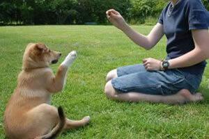 Как избежать ошибок при дрессировке собак