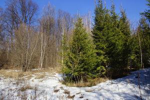15 мартаВ ёлках, естественно, снега оказалось больше.