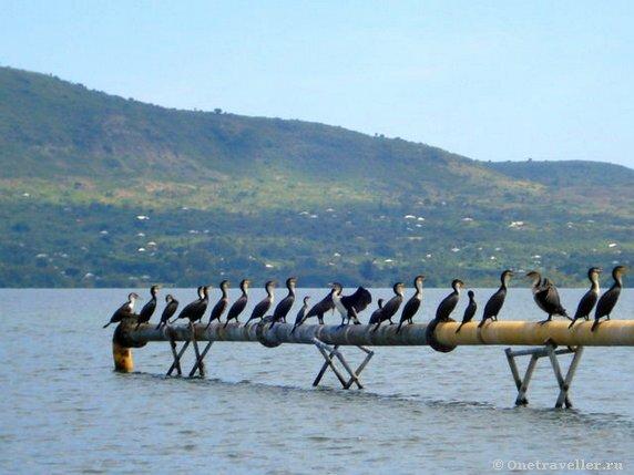 Кения. Озеро Виктория.