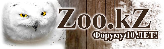 ����� Zoo.kZ