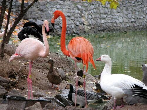 Птицы в киевском зоопарке. Фото Sava-vava на Яндекс.Фотках