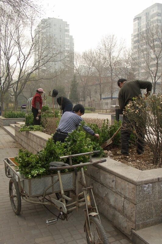 Работы по озеленению сквера, Пекин