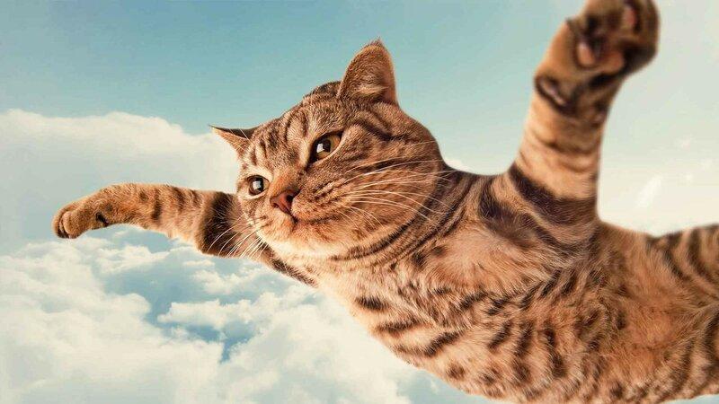 cat-flying.jpg