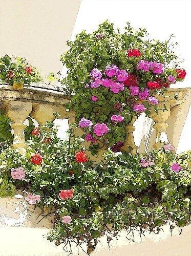 Для обильного цветения растения нужно