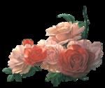 rosenrosa045.png