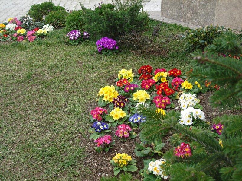 Римские каникулы,Рим,цветы
