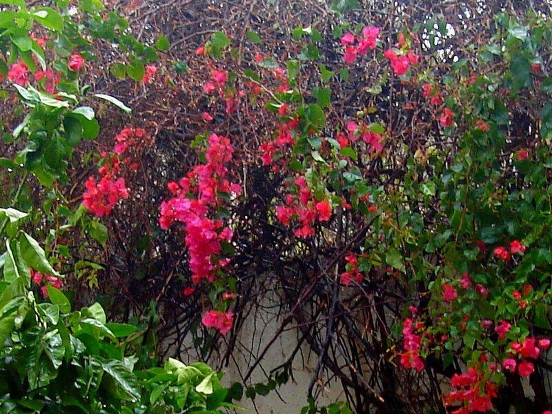 Святая Земля,весна,цветы