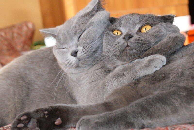 валентинки с котятами фото нее журналист взял