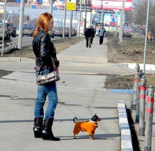 дама с собачкой*