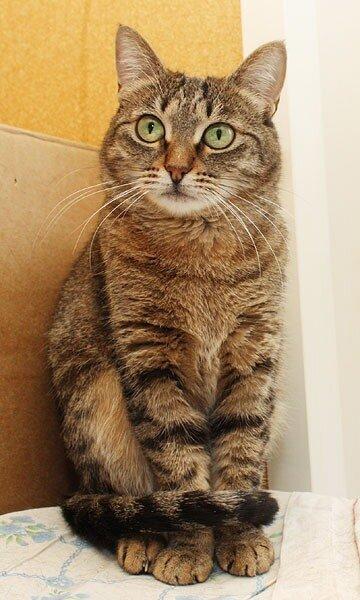 Отдам в частный дом кошку мини-рысь Масюню!