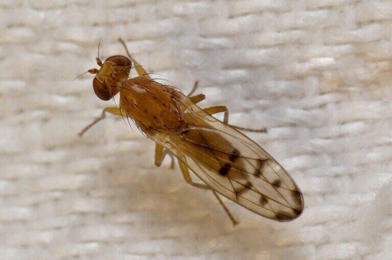 Сновидение, где кусают мухи, является символом того, что с существующими проблемами будет не так легко справиться.