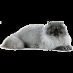 Кошки 5 0_50a2f_3310ce12_S
