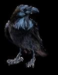 Птицы  разные  0_51c38_75372893_S