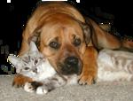 Кошки 5 0_5202a_57305f10_S