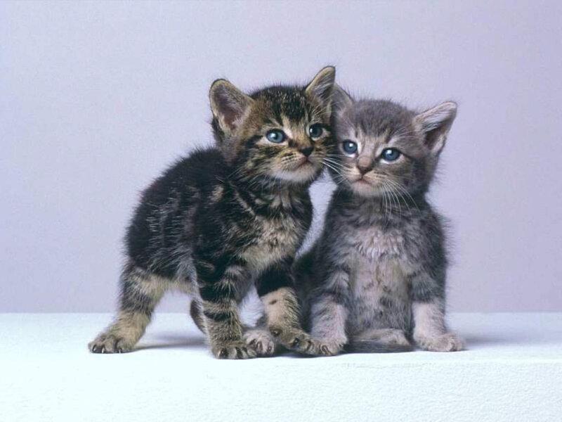 Кошки  0_52934_cd2e290c_XL
