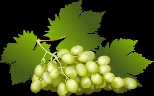 виноград (27).png