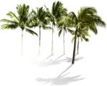 NLD I Sea You Palm tree (2).png