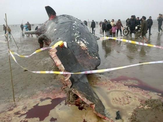 Хуй кита в картинках