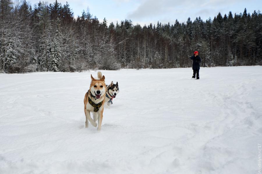 alexbelykh.ru, Чёртов лес, озеро Ловчее