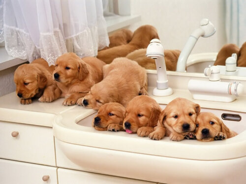 Методы разведения собак