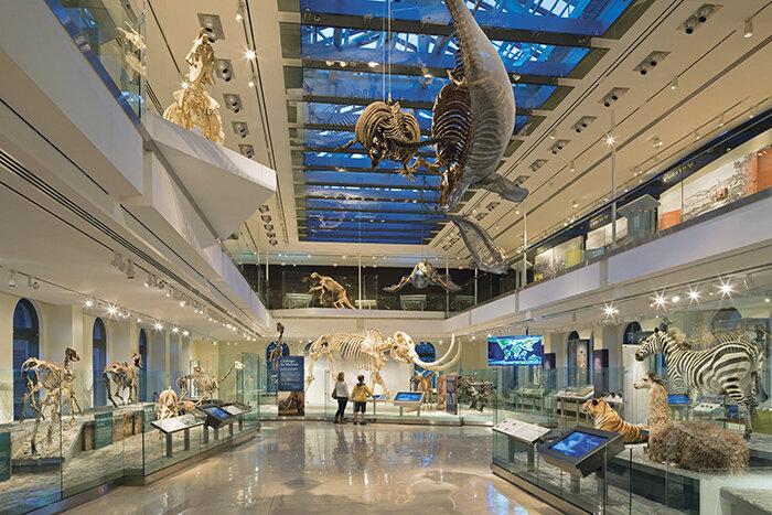 Национальная аллея. Национальный музей естественной истории