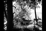 Уплывающий лес