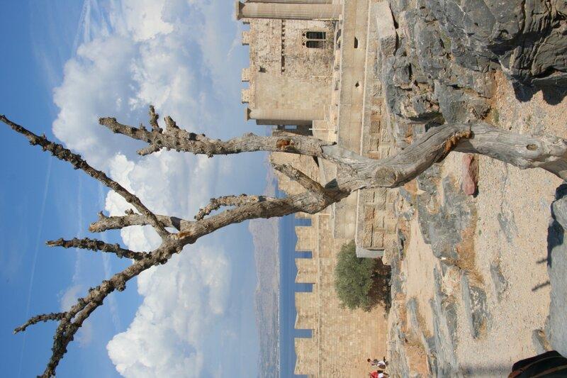 Сухое дерево в Акрополе
