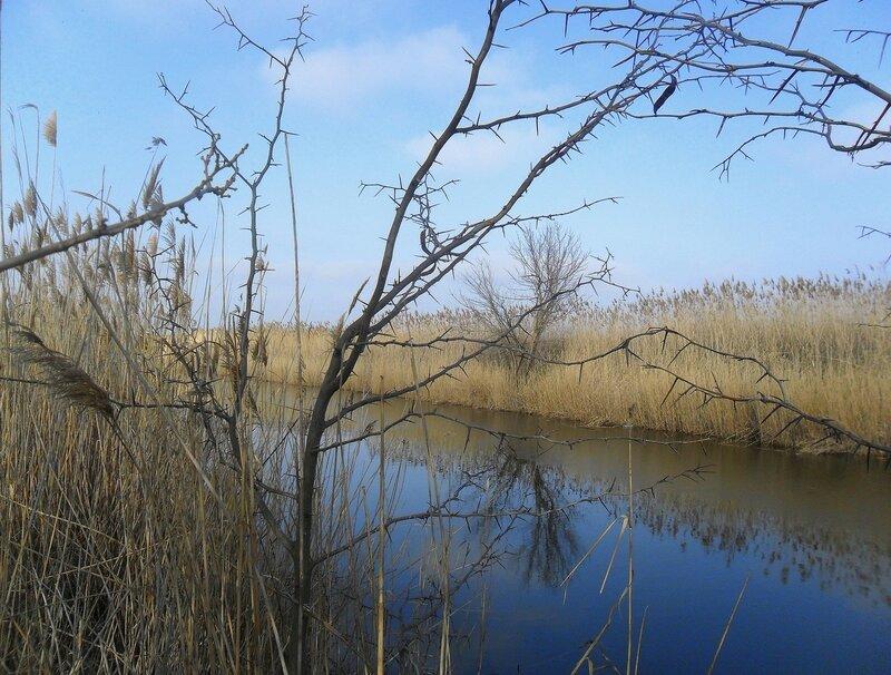 Пейзаж с водной линией и колючками... SAM_5499.JPG