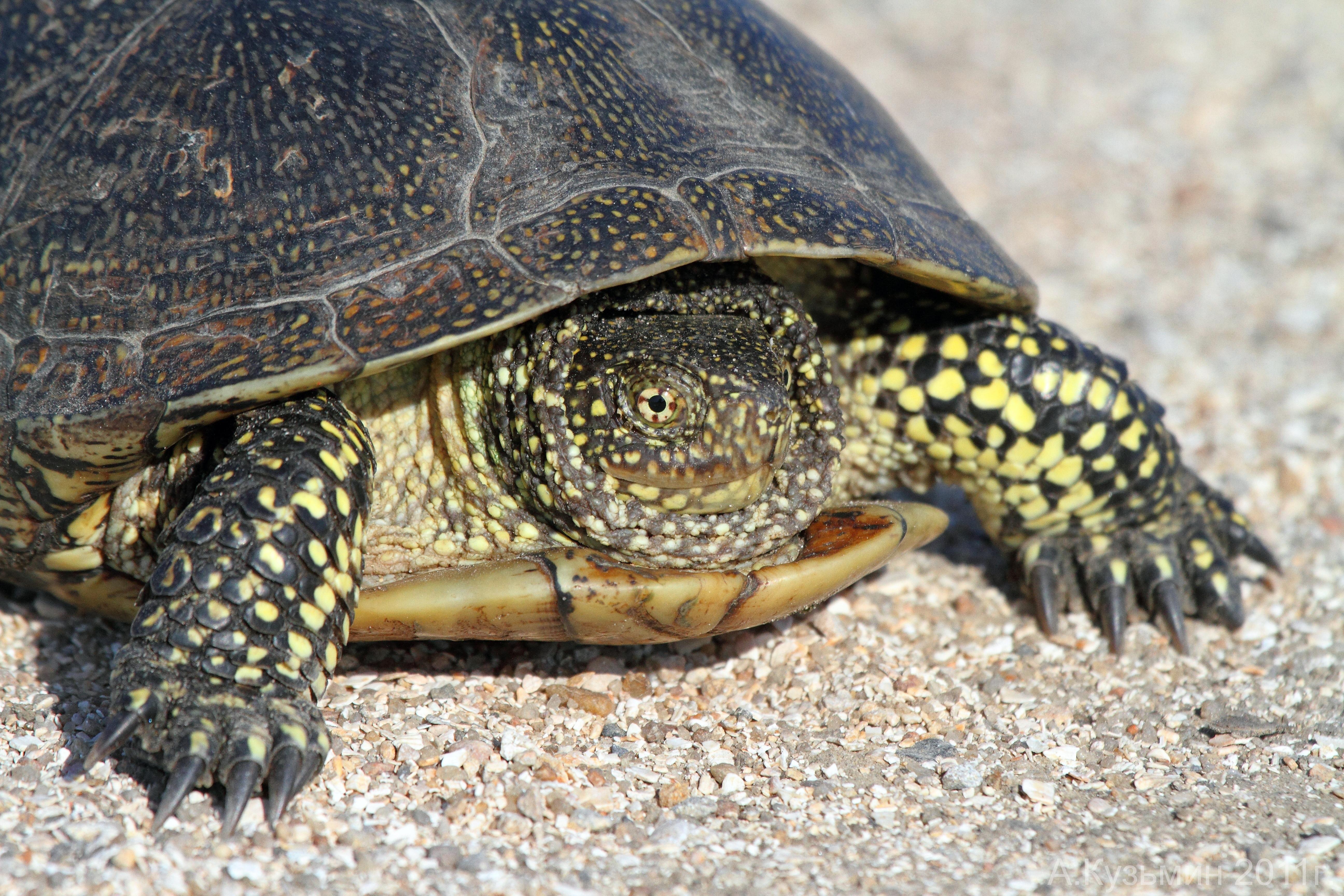 Сколько живут черепахи в домашних 26