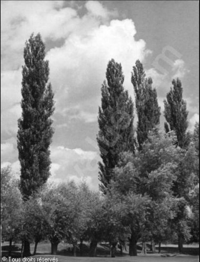 1935. Лесистый парк
