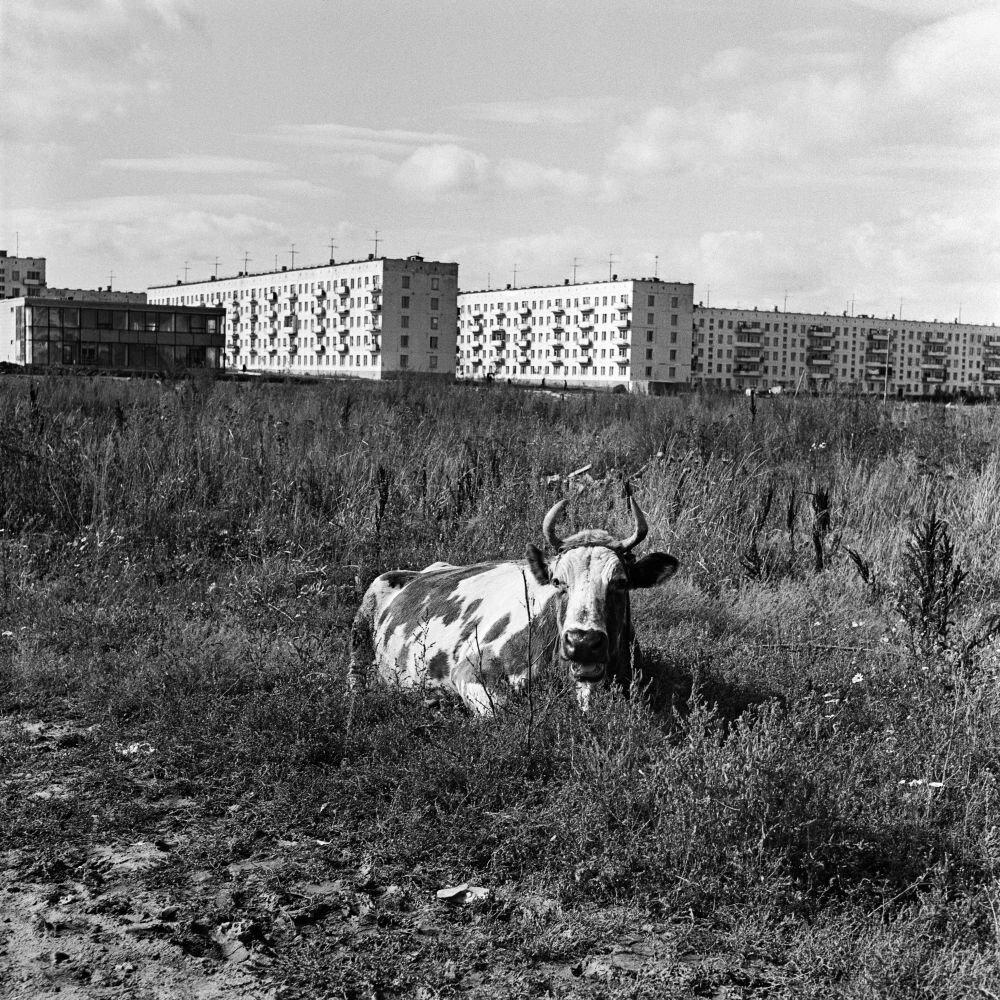 1968. Строительство жилого района Беляево-Богородское