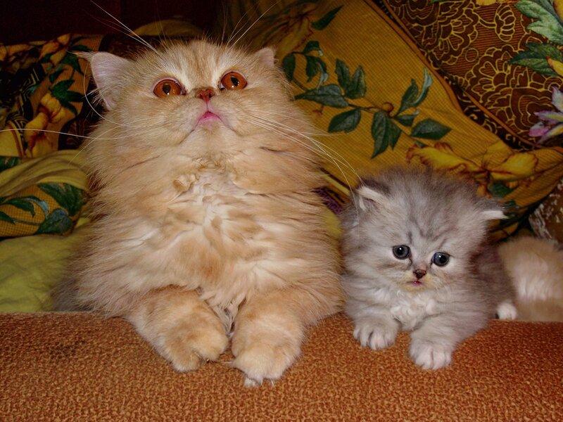 Подборка фото с кошками