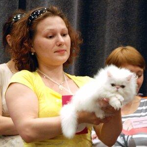 Best Kitten III - 11 Heppi Hightborn FINE PEARL (Male) PER w 62 Гольмакова И.,