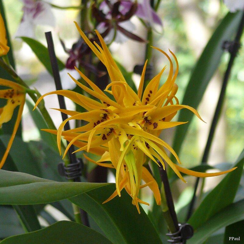 орхидеи в Павильоне королевы Беатрикс