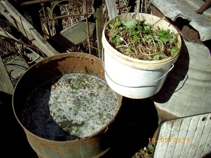 Подкормки для растений своими руками