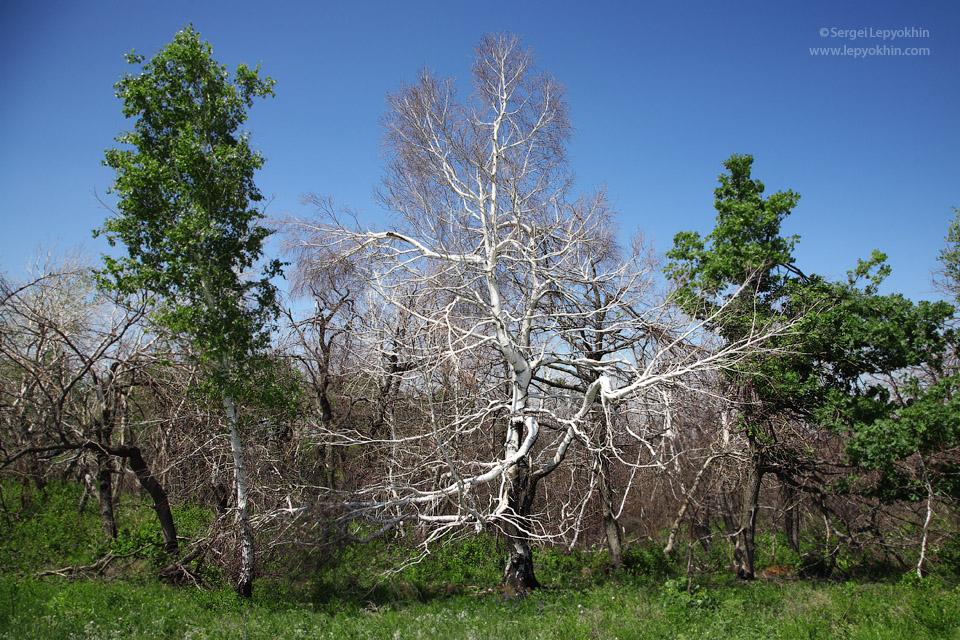 Роща пьяных берез на Склоне бешеных молний. Фотопоездка по Волгоградской области.