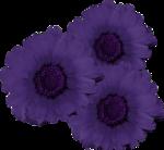 «CG_Flowers-for-you»  0_639b4_20e69656_S
