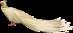 Аист,цыплята,павлин. 0_65e21_3964012d_S