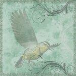 «птицы наблюдают часами»  0_676fa_22bde09_S