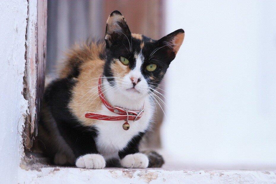 греческие кошки картинки действительно познать любую