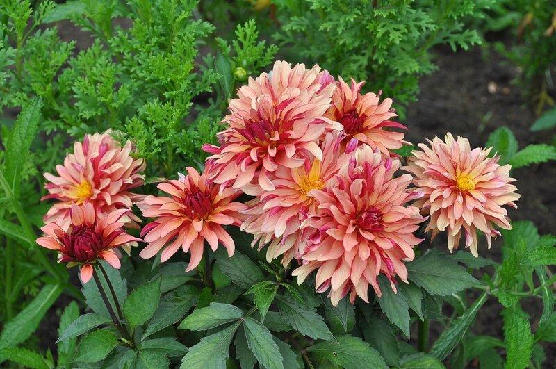 первом этажном цветы цветущие в августе фото колодок