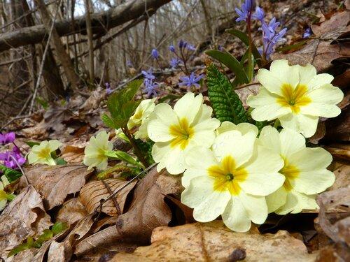 Горная клумба весны