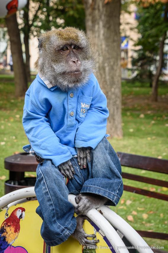 сидящая обезьяна