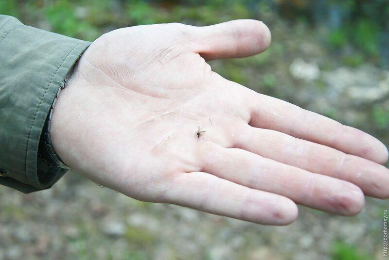 первый комар
