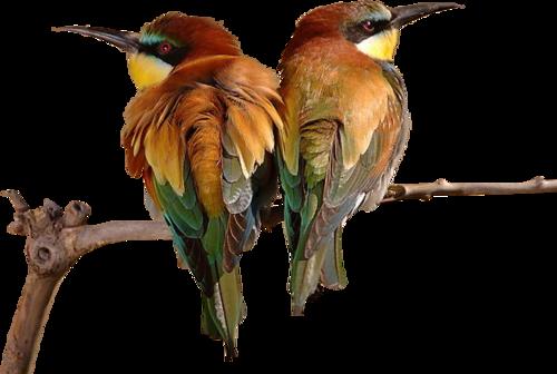 Ptice..... 0_85498_ca716af9_L