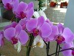 Орхидеи в холле отеля.