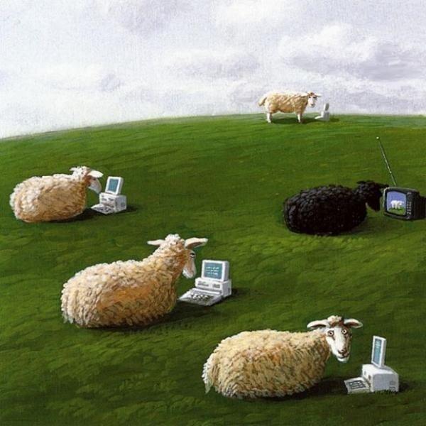 Только тупые овцы смотрят телевизор!